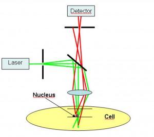 Mit konfokaler Mikroskopie werden beispielsweise in der Diagnostik virtuelle Schnitte durch die Gewebestruktur erzeugt bzw. die Oberflächenbeschaffenheit der Probe wird durch die Verschiebung der Brennebene detektiert. Bild: PI