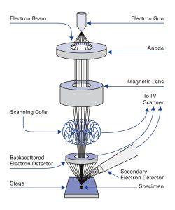 Prinzipieller Aufbau eines Raster-Elektronenmikroskops (SEM). Bild: Physik Instrumente (PI)