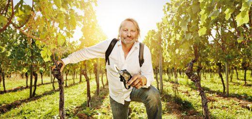 Die Weinqualität hängt zu einem großen Teil von der korrekten Schnitttechnik ab: Jeder Weinstock kann jedes Jahr Dutzende von Trieben bilden. Für einen guten Wein dürfen aber nur ein oder zwei weiter wachsen. Bild: FAULHABER