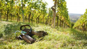Der Winzer kann den Akku einfach am Gürtel befestigen und sich ohne Einschränkung auf dem Weinberg in den Reihen bewegen. Die Scheren sind mit dem Akku über ein kurzes Kabel verbunden. Bild: FAULHABER