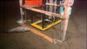Der Hades-ERC-Roboter nimmt Proben des Bodensediments und bringt diese zur Untersuchung an die Oberfläche. Bild: Ronnie N. Glud